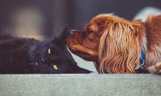 arredare casa a prova di animale