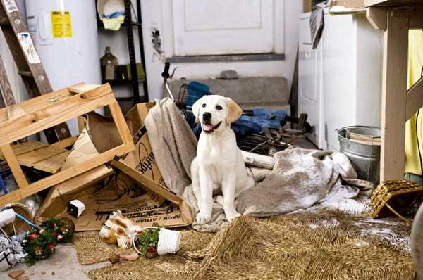 come arredare casa per gli animali