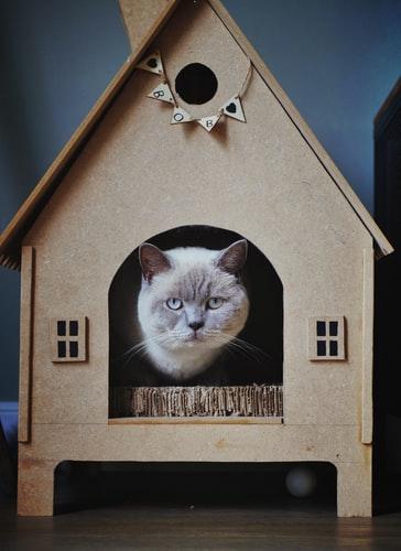 casa pet friendly