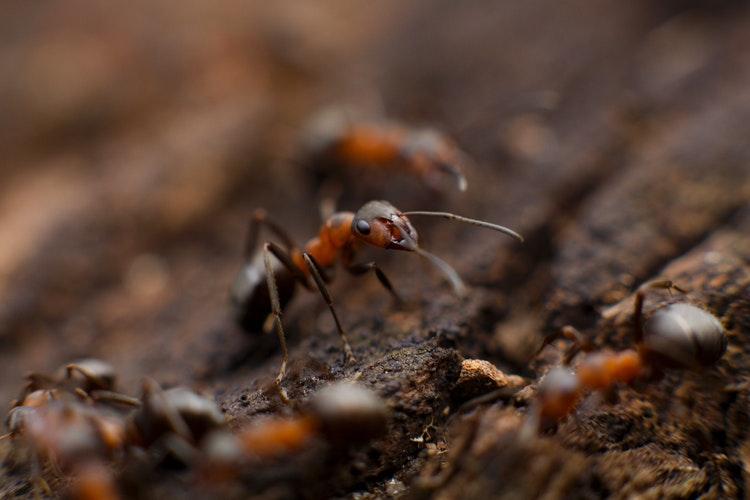 Aprende a eliminar las hormigas de tu casa