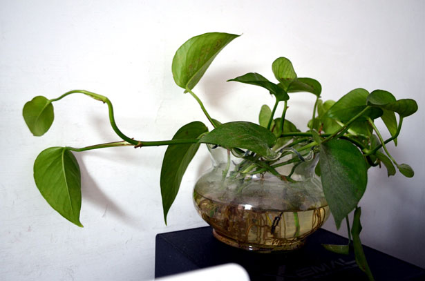 plantas de interior photos