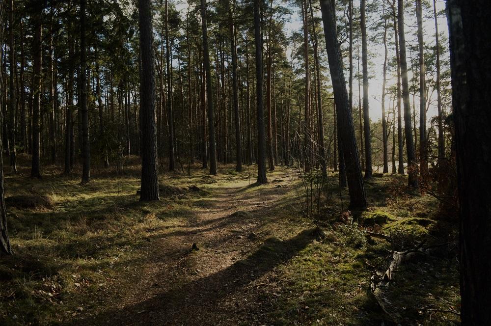 terreno con árboles en venta