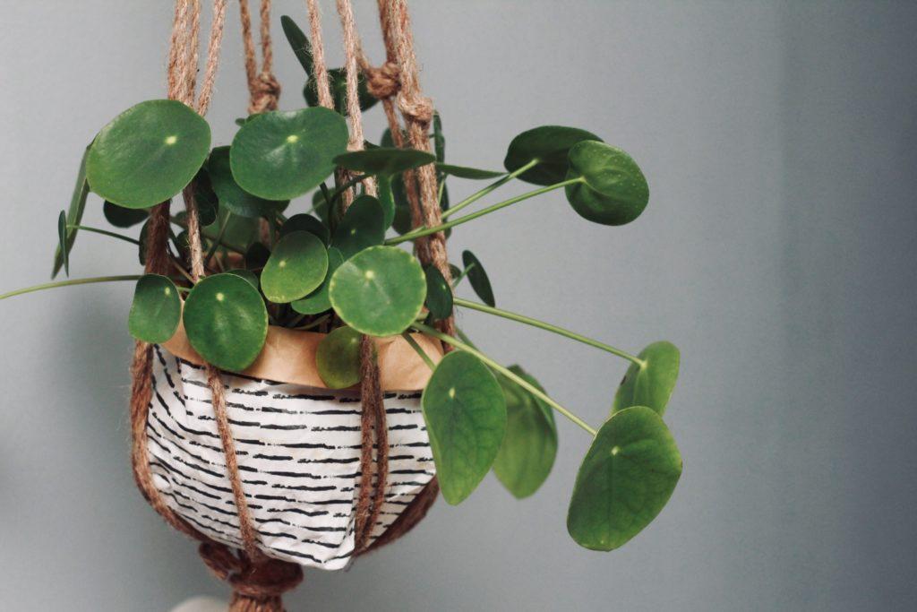 Plantas Colgantes Housfy